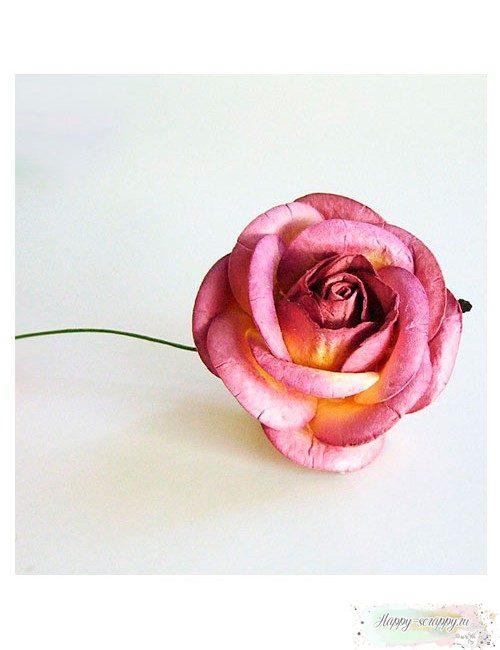 Роза сиренево-молочная