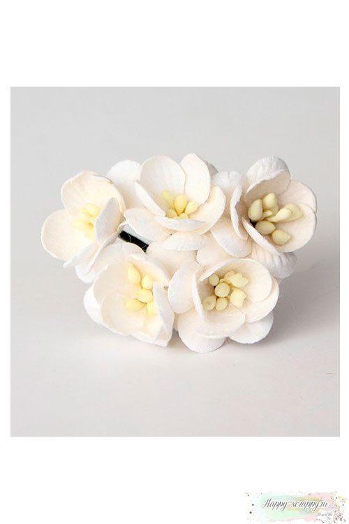 Цветы вишни белые