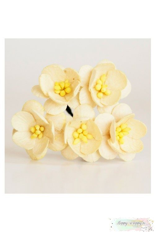Цветы вишни молочные