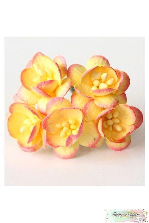 Цветы вишни желтый-розовый