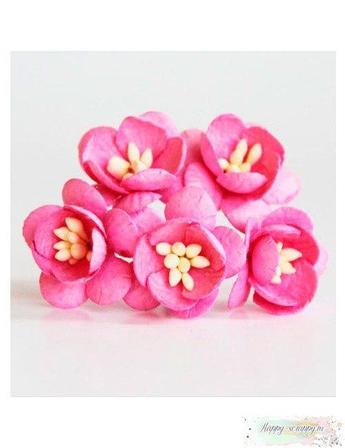 Цветы вишни цвета фуксии