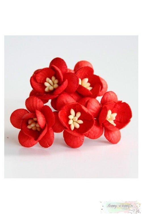Цветы вишни красные