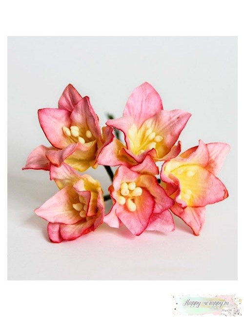 Лилии розово-желтые (1 шт)