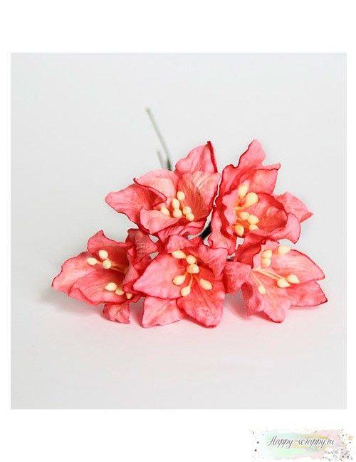 Лилии коралловые