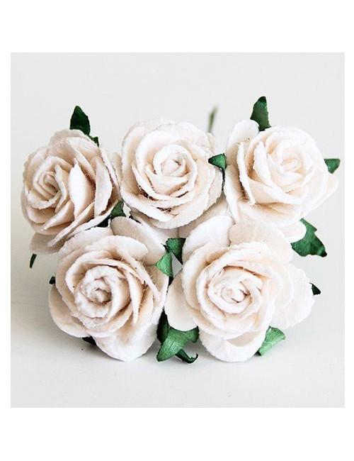 Розы белая