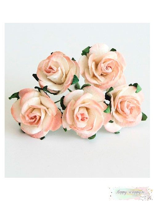 Роза белая-персиковая
