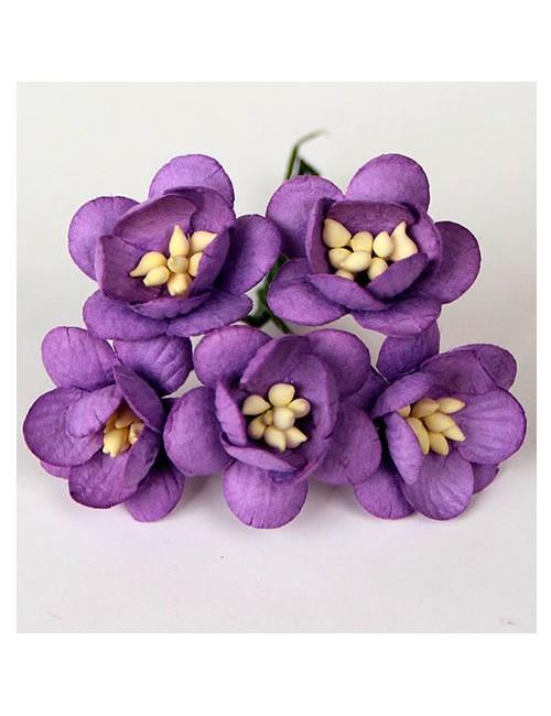 Цветы вишни сиреневые