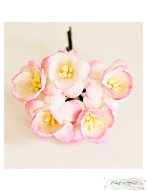 Цветы вишни белый-розовый