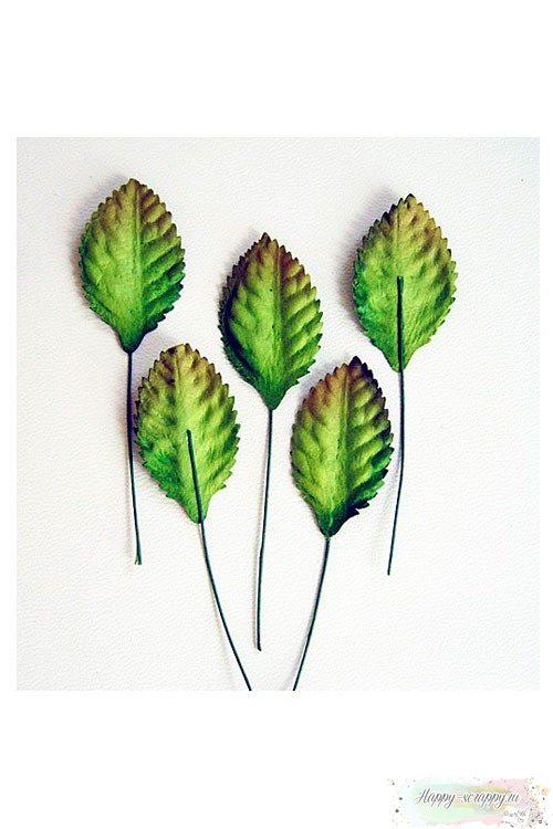 Листья зеленые средние