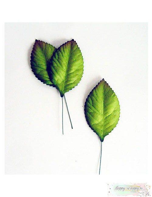 Листья зеленые большие