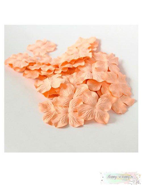 Гортензии большие — персиковые