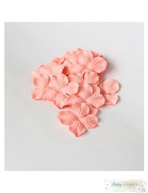 Гортензии большие — розово-персиковые