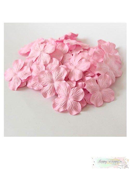 Гортензии большие — светло-розовые