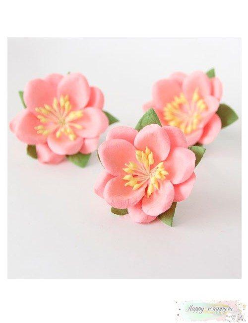 Сакура розово-персиковая