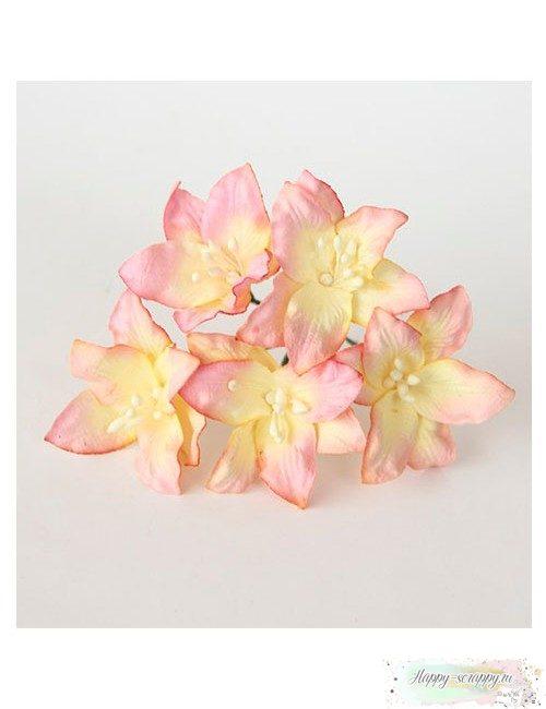 Лилия розово-желтая светлая №2 (1 шт)