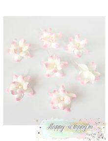 Фиалка - розово-белая (1 шт)