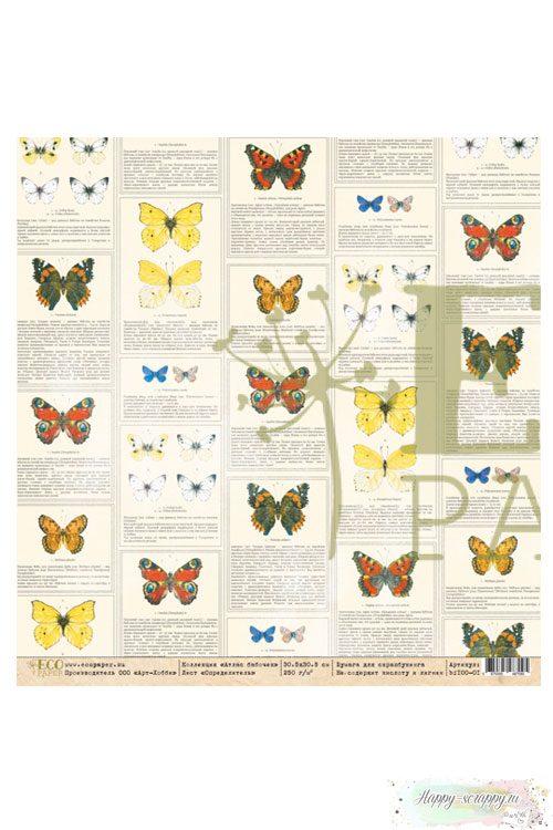 Бумага для скрапбукинга Атлас бабочек - Определитель