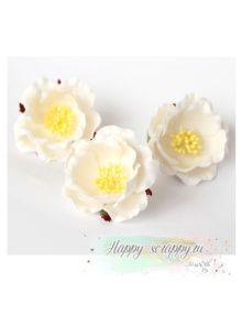Полиантовая роза - белая (1 шт)