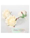 Полиантовая роза - молочная (1 шт)