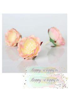 Полиантовая роза розово-кремовая (1 шт)
