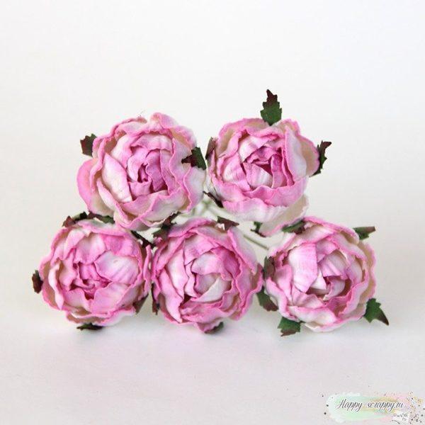 РАНУНКУЛЮСЫ - розово-белые