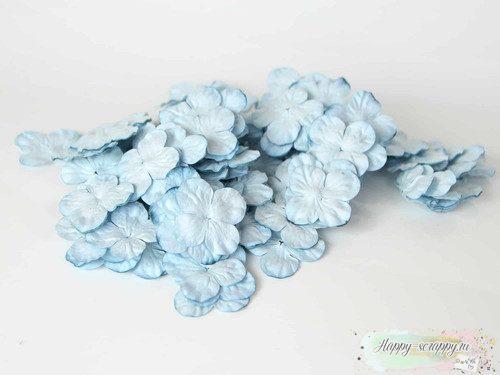 Гортензии маленькие голубые