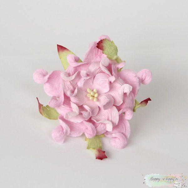 Гардении розовые