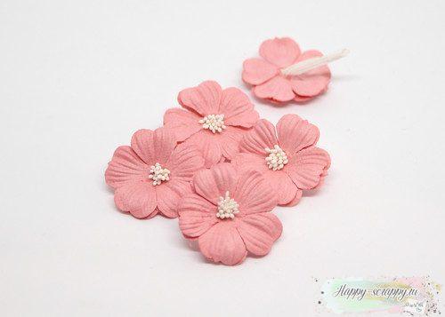 Примула розово-персиковая
